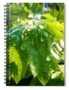 Rain Soaked Leaf Spiral Notebook