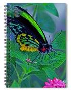 Rainbow Butterfly Spiral Notebook