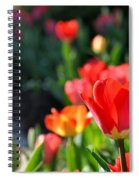 Rainbow Colors Spiral Notebook