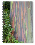 Rainbow Eucalyptus Spiral Notebook