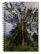 Rainbow Eucalyptus - Tall Proud And Beautiful Spiral Notebook