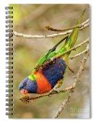 Rainbow Lorikeet 02 Spiral Notebook