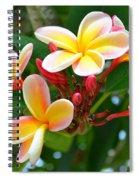 Rainbow Plumeria - No 4 Spiral Notebook