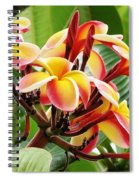 Rainbow Plumeria - 1 Spiral Notebook