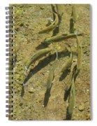 Rainbow Trout Art Prints Fish Fishing Fishermen Spiral Notebook