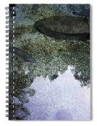 Rainbow Trout Spiral Notebook