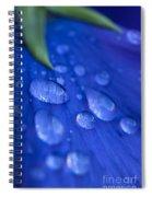 Raindrop Pansy Spiral Notebook