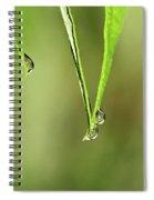 Raindrop Reflection Spiral Notebook