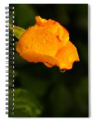 Raindrops On A Yellow Rose Spiral Notebook