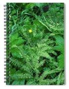 Raindrops On Buttercups Ranunculus Spiral Notebook