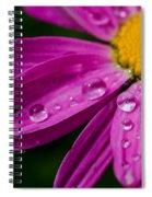 Raindrops On Daisies Spiral Notebook