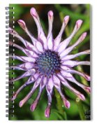 Raindrops On Daisy Square Spiral Notebook