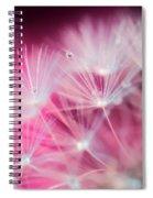 Raindrops On Dandelion Magenta Spiral Notebook