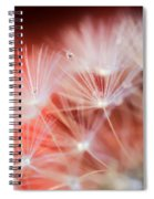 Raindrops On Dandelion Red Spiral Notebook