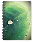 Raindrops On Elephant Ear Spiral Notebook