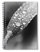 Raindrops On Grass In Black And White Spiral Notebook