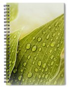 Raindrops On Hostas Spiral Notebook