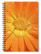 Raindrops On Orange Daisy Flower Spiral Notebook