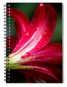 Raindrops On Red Petals Spiral Notebook