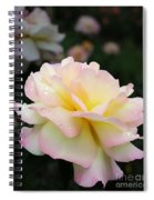 Raindrops On Rose Petals Spiral Notebook