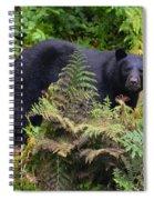 Rainforest Black Bear Spiral Notebook
