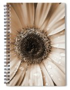 Raindrops On Gerber Daisy Sepia Spiral Notebook