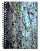 Rainy Day In The Forest Spiral Notebook