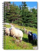 Ram And Ewes Spiral Notebook