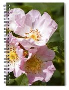 Rambling Rose 3 Spiral Notebook