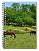 Ranch Daisies Spiral Notebook