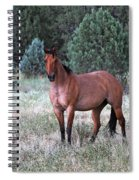 Ranch Horse Young Arizona Spiral Notebook