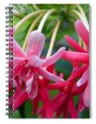Rangoon Creeper Flower Spiral Notebook