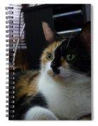 Phantom Calico  Spiral Notebook