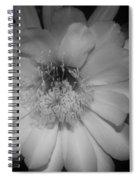 Rapsody  Spiral Notebook