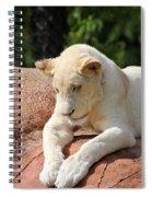 Rare Female White Lion Spiral Notebook