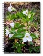 Rare Great White Trilliums Spiral Notebook