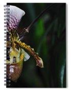 Rare Orchid - Paphiopedilum Gratrixianum Spiral Notebook
