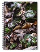 Rare Spring Beauty Spiral Notebook