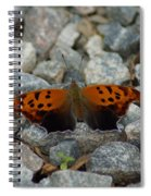 Rarely-sighted Butterfly Species Spiral Notebook