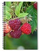 Rasberries Spiral Notebook