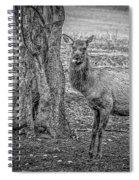 Raspberry Elk Black And White Spiral Notebook