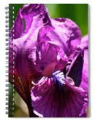 Raspberry Jam Iris Spiral Notebook