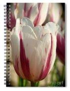 Raspberry Vanilla Tulip Spiral Notebook