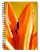 Reach For The Light Spiral Notebook