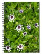 Reaching For The Sun Spiral Notebook