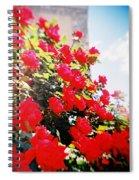 Recesky - Bright Roses Spiral Notebook