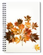Reconstructed Full Moon Maple Spiral Notebook