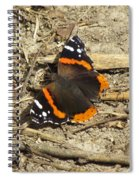 Red Admiral Spiral Notebook