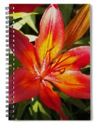 Red And Orange Lilly In The Garden Spiral Notebook