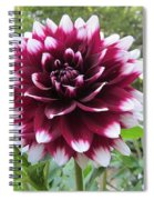 Red And White Dahlia Spiral Notebook